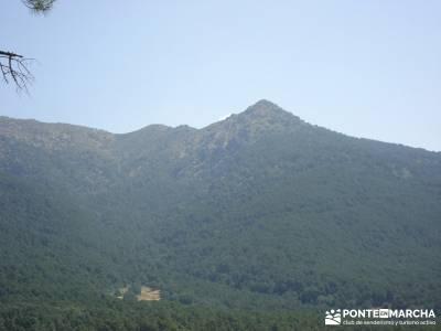 Pinares de Piedralaves;rutas por cercedilla rutas pedriza ruta por madrid